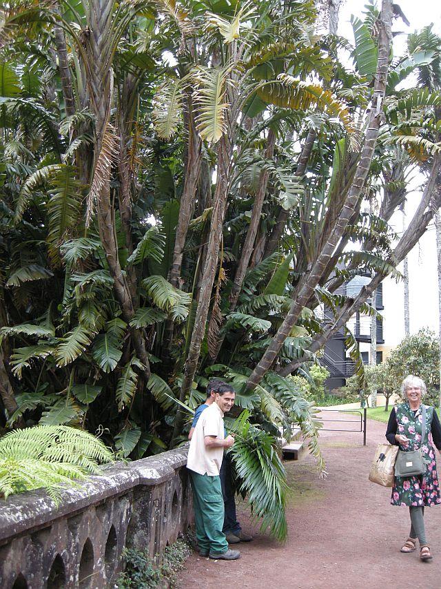 Azorean flora