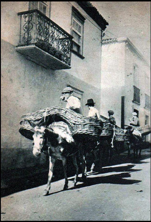 Ribera Grande Sao Miguel donkey pannier baskets