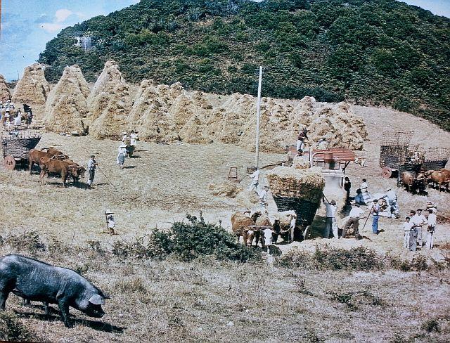 Photograph taken on Santa Maria island by Pepe Elizabeth. 1950's Copyright Bix Archive. photopepe